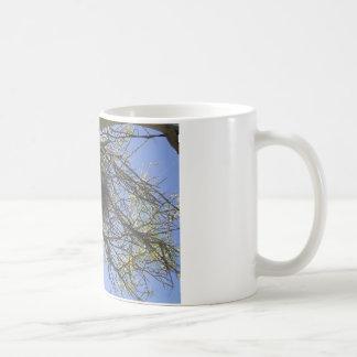 Bird Nest in Branches Coffee Mug