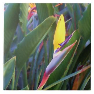 Bird of Paradise #1 - Laguna Hills Ceramic Tile