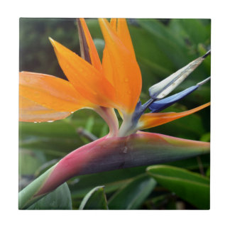 Bird Of Paradise Ceramic Tile