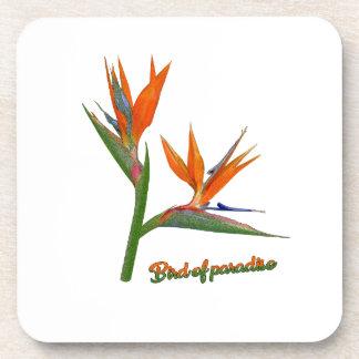 Bird Of Paradise Coaster