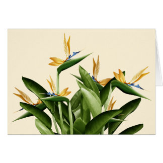 Bird-of-Paradise Fantasy Plant Greeting Card