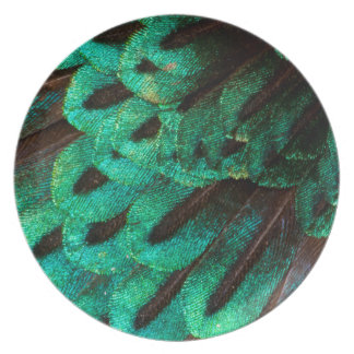 Bird of Paradise feather close-up Plate