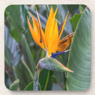Bird of Paradise flower hard plastic coasters