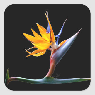 Bird of Paradise Flower Square Sticker