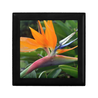 Bird Of Paradise Gift Box