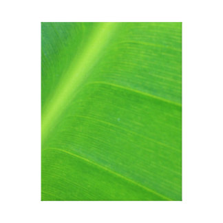 Bird of Paradise Leaf Stretched Canvas Prints