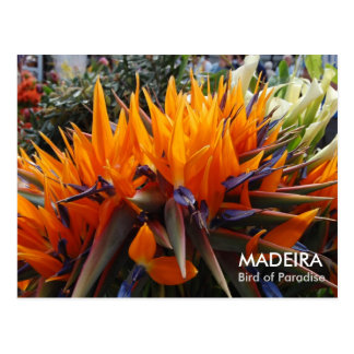 Bird of Paradise, MADEIRA Postcard