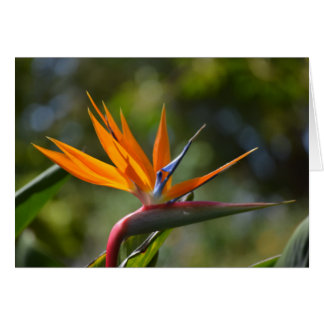 bird of paradise note card