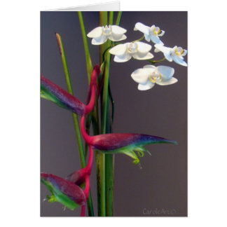 Bird-of-Paradise Orchids Note Card