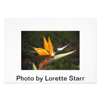 Bird of Paradise photo by Lorette Starr Invitation