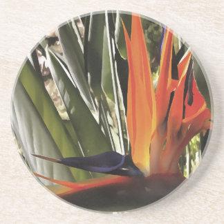 Bird of Paradise (Strelitzia) Coaster