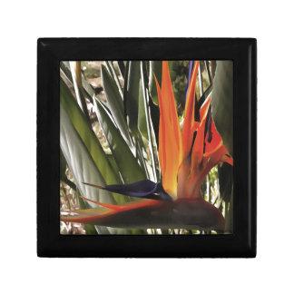 Bird of Paradise (Strelitzia) Gift Box