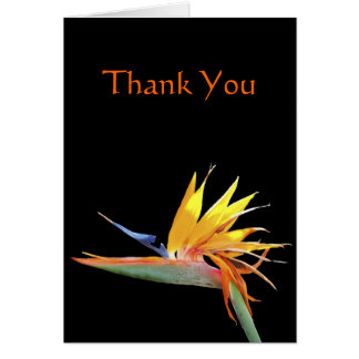 Bird of Paradise Thank You Note Greeting Card