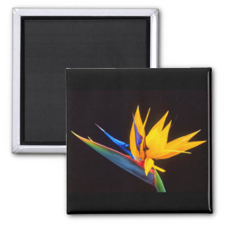 Bird of Paradise: Tropical Flower Square Magnet