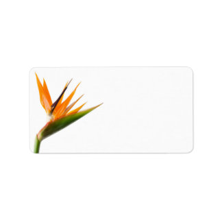 Bird of Paradise Wedding Labels