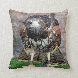 Bird of Prey #15-Red Tailed Hawk Cushion