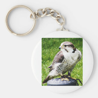 Bird of Prey #2- Peregrine Falcon Basic Round Button Key Ring