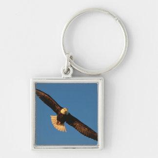 Bird of Prey, Bald Eagle in flight, Kachemak Key Ring