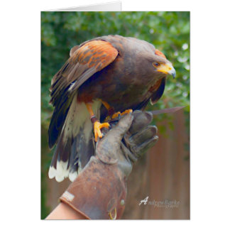 Bird of prey Birthday Card
