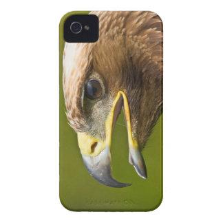 Bird of Prey BlackBerry Bold Case-Mate iPhone 4 Case-Mate Case