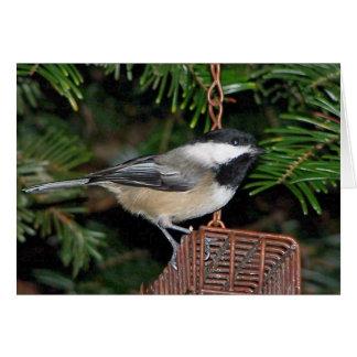 Bird On A Birdfeeder Card