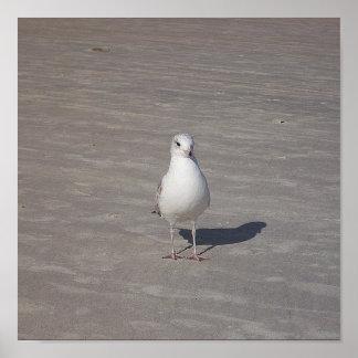 Bird On A Sandy Beach Poster