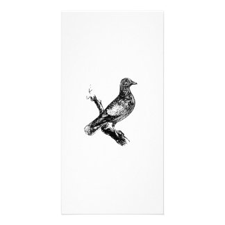 Bird on a Tree Branch Photo Cards