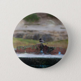 bird on a wall 6 cm round badge