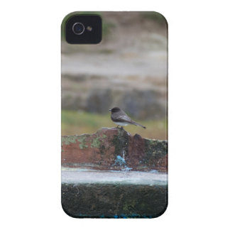 bird on a wall iPhone 4 case
