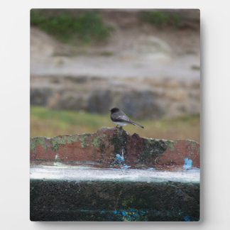 bird on a wall plaque