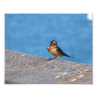 Bird on dock photo print