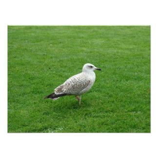 Bird on grass photo