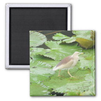 Bird on Lilly Pads Square Magnet