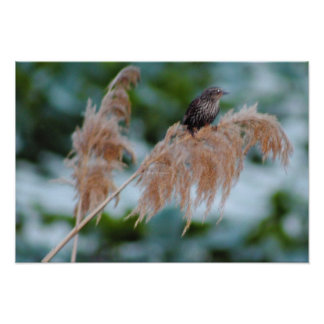 Bird on Marsh Plant Poster