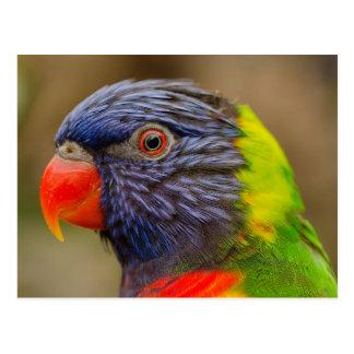 bird parrot animal postcard