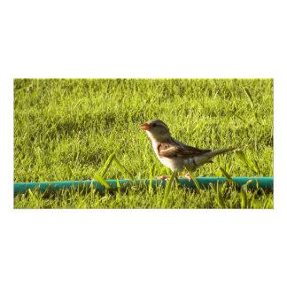 Bird Personalized Photo Card