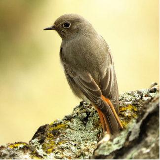 bird photo sculpture magnet