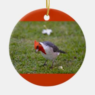 Bird Red-Crested Cardinal Ornament