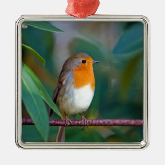 bird robin waiting for love Silver-Colored square decoration