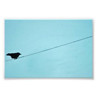 Bird silhouette-blue sky photo print