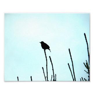 Bird Silhoutte Photo