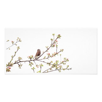 Bird Singing with Spring Flowers Customized Photo Card