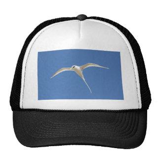 Bird Straw in Mauritius Tail Cap