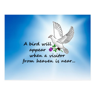 Bird, Visitor from Heaven Postcard