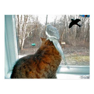 Bird Watching Postcard
