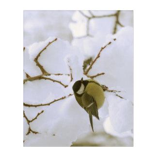 Bird Winter Photo Acrylic Wall Art