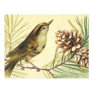Bird with Fir Cone Vintage Illustration Postcard
