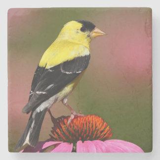 Bird yellow to _coaster stone coaster