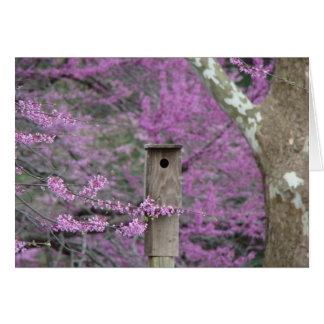 Birdhouse Among Redbud Blossoms Card