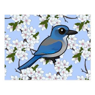 Birdorable Woodhouses Scrub-Jay Postcard
